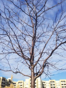 bare-tree-ps-web