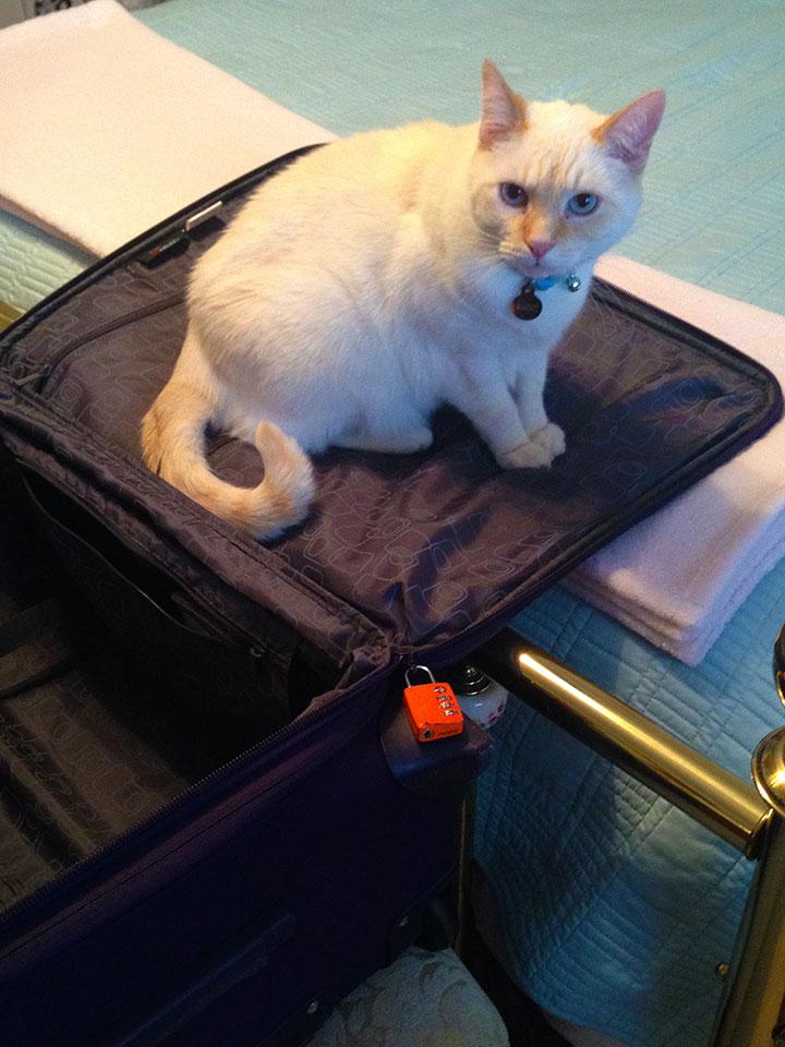 Suitcase Sammy