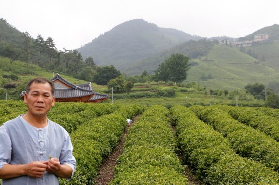 This man taught us all about the production of green tea, beginning with the picking of the plant!