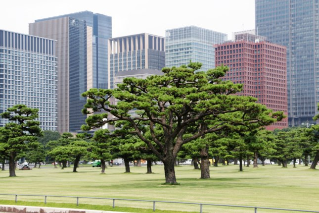 Trees on the Palace grounds and modern Marunouchi behind them
