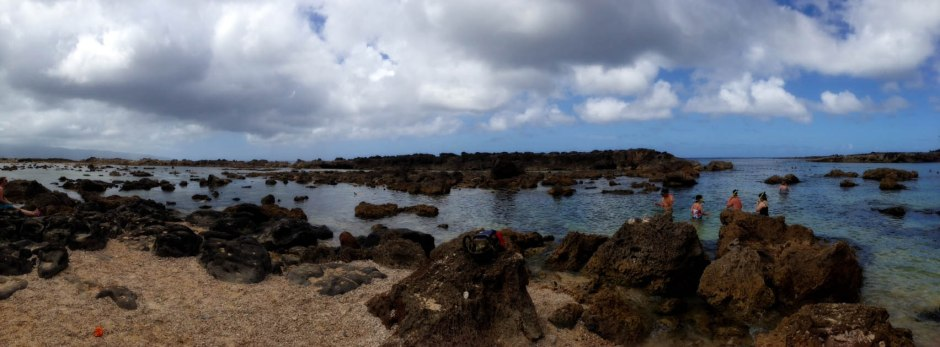 Visit Sharks Cove on the North Shore for some great snorkeling!